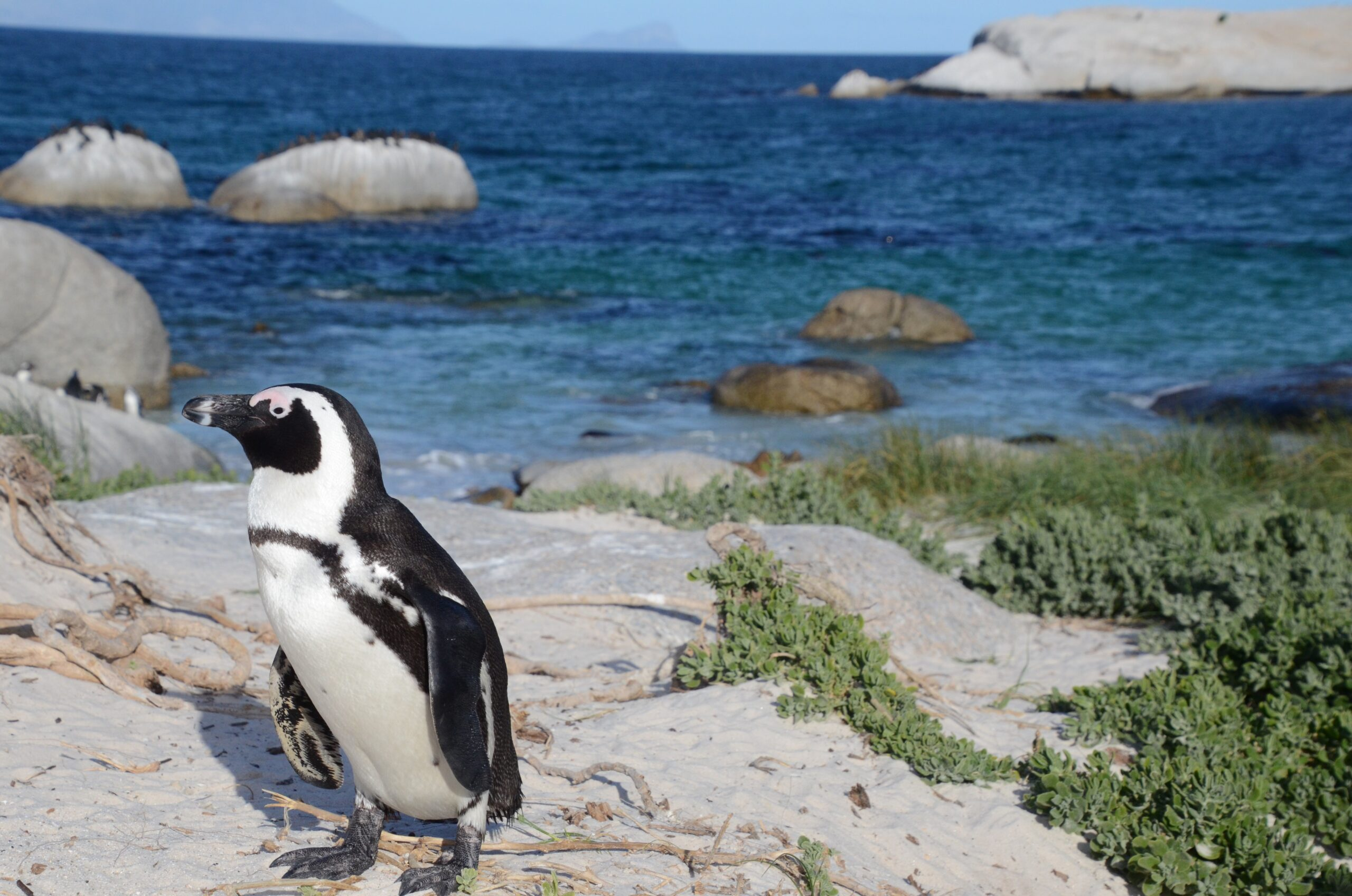 25th April 2021 is World Penguin Day #WorldPenguinDay