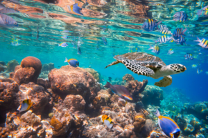 Turtles and marine life in the sea