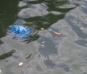 Plastic bag in river
